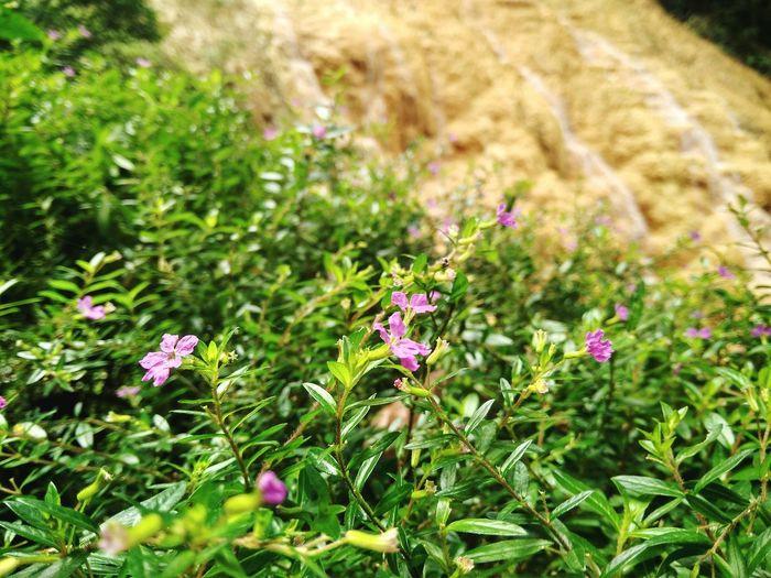 flower in pancuran 7 baturaden, banyumas Flower Flowers Nature Photography Nature First Eyeem Photo