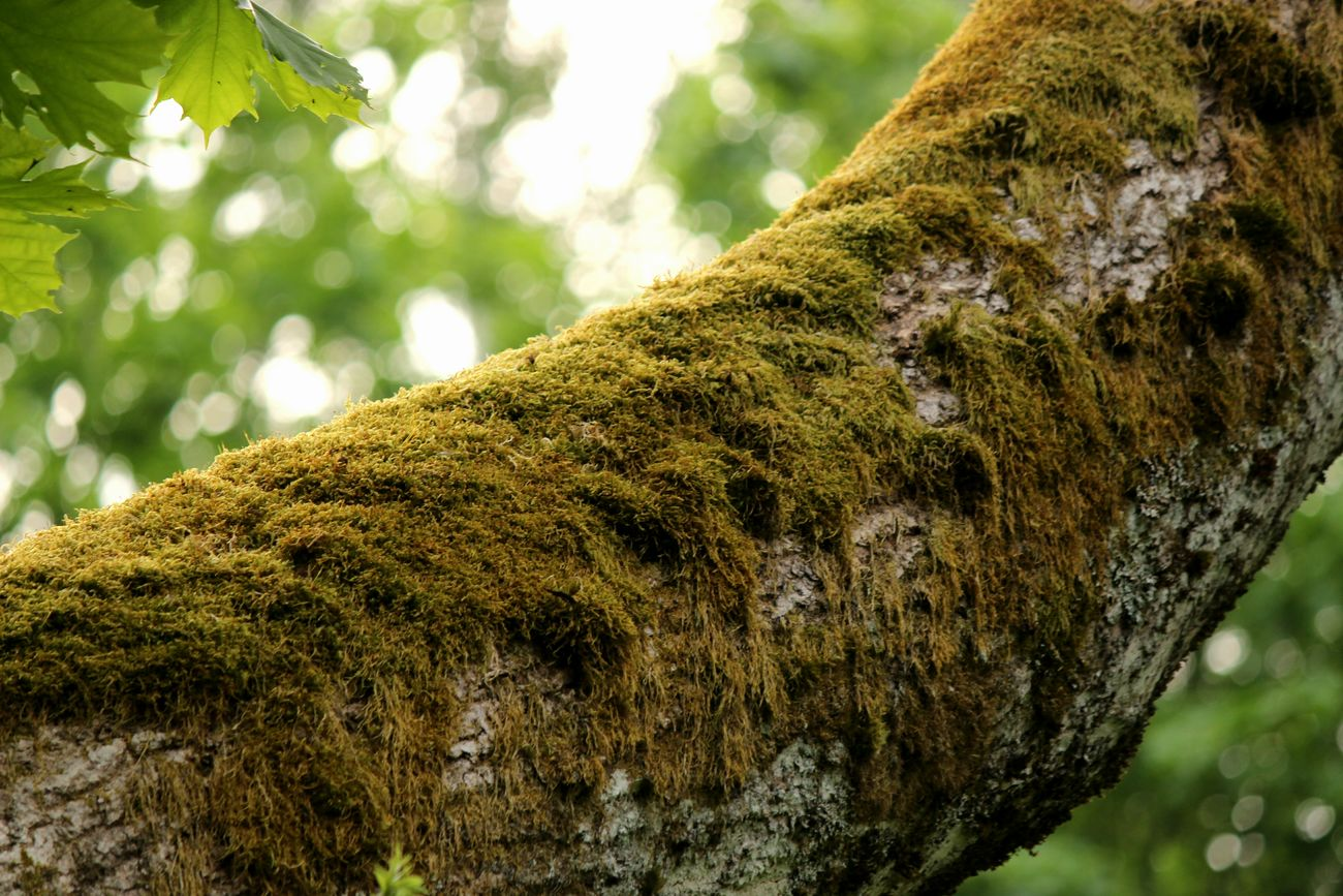 Moss Beauty In Nature Growth Plants Forest Tree Green Color Nature No People Outdoors Close-up Focus On Foreground Sweden ❤️