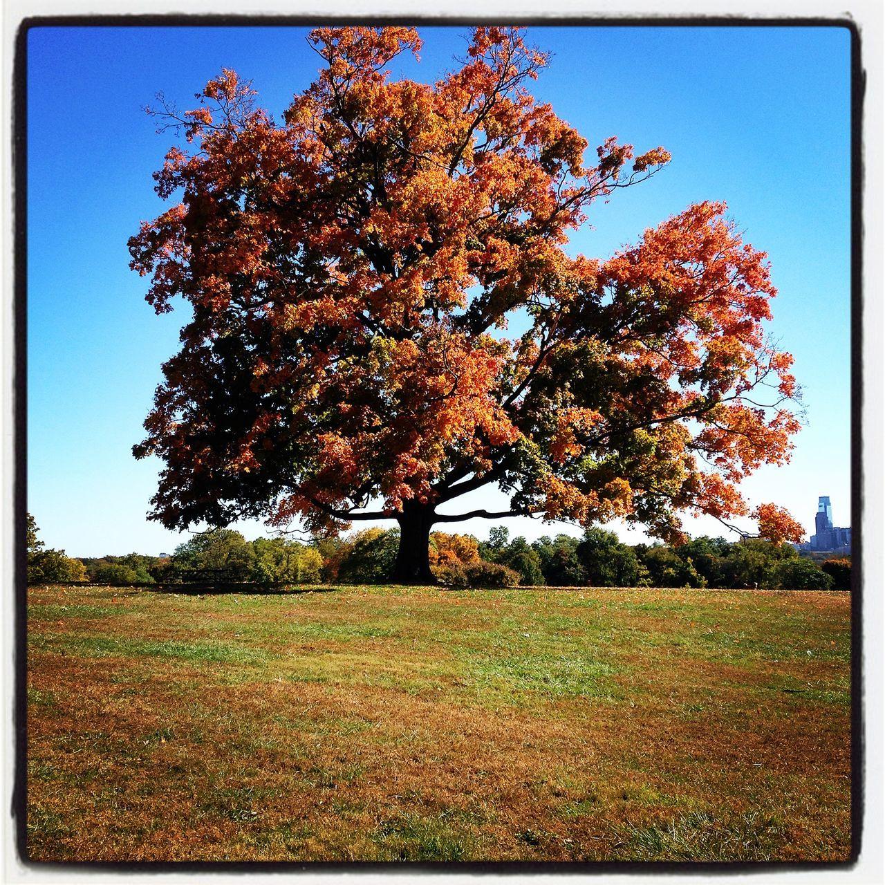 Philly fall colors Autumn Colors Fall Beauty Belmont Plateau Philadelphia