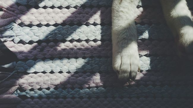 """C U N D A Y """" Sundayculture Warm Day Carpet Cat Minimalism Paws And Claws Catsagram Catportrait Afternoon Nap Portrait Photography Gato"""