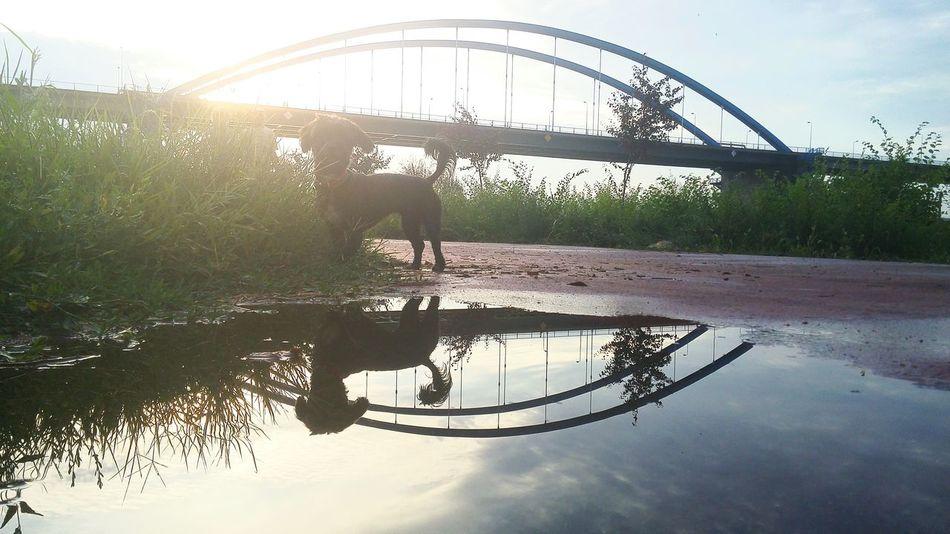 After Rain Dog Walking Bridge Sunset First Eyeem Photo