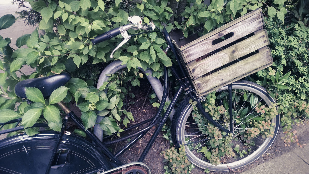 Basket Bicyle Bike Box City Life Day Growth High Angle View Leaf Nature No People Outdoors Plant Street Life Transportation Urban Wheel Wood Material