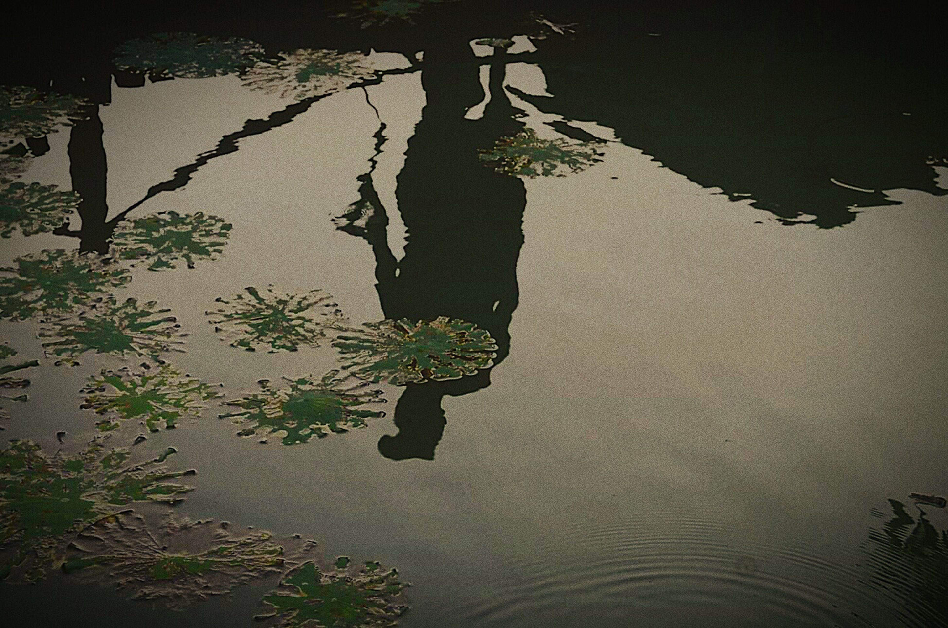 reflection, water, high angle view, waterfront, lake, nature, leaf, outdoors, day, tree, growth, plant, puddle, no people, beauty in nature