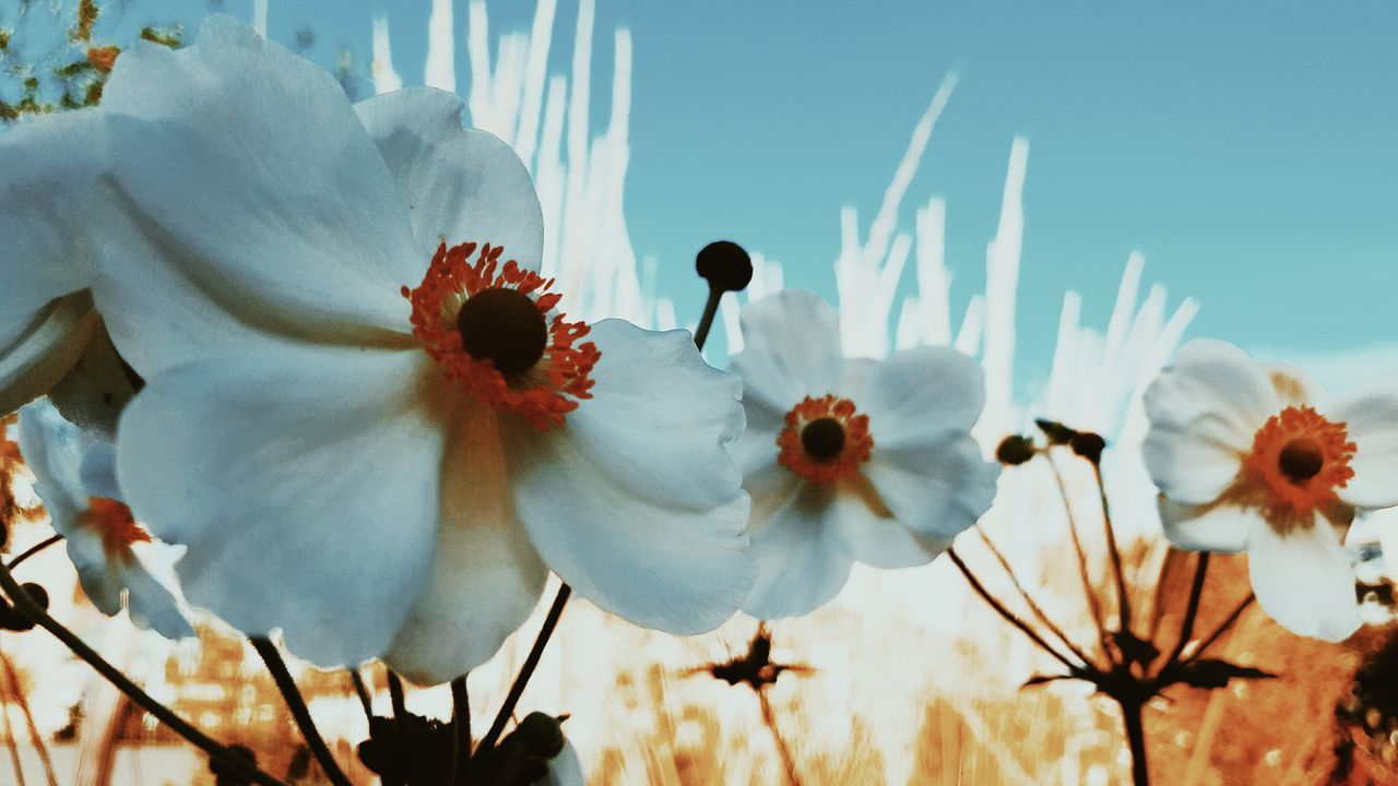 Live For The Story Summer Sunset Sunset Silhouettes Flower Flowers, Nature And Beauty Growth Plant Nature Fragility Cactus No People Flower Head Outdoors Day Poppy Beauty In Nature Prickly Pear Cactus Close-up Sky Freshness