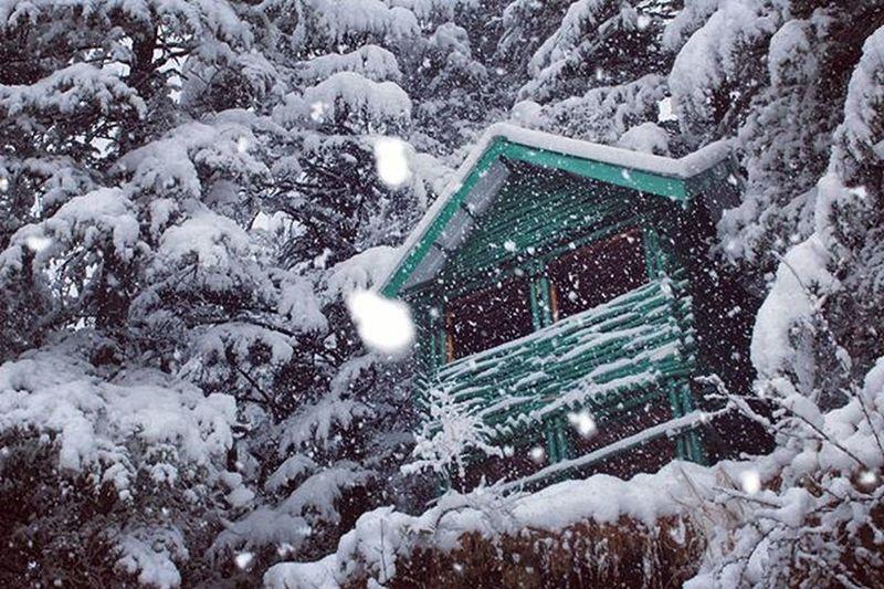 Tree house , Shimla Instameetshimla Instagram Himalayasarecalling Mountains Snowfall Treehouse Shimla Himalayas Snowfall<3 Showcase March Bento EyeEm Getty How Do We Build The World?