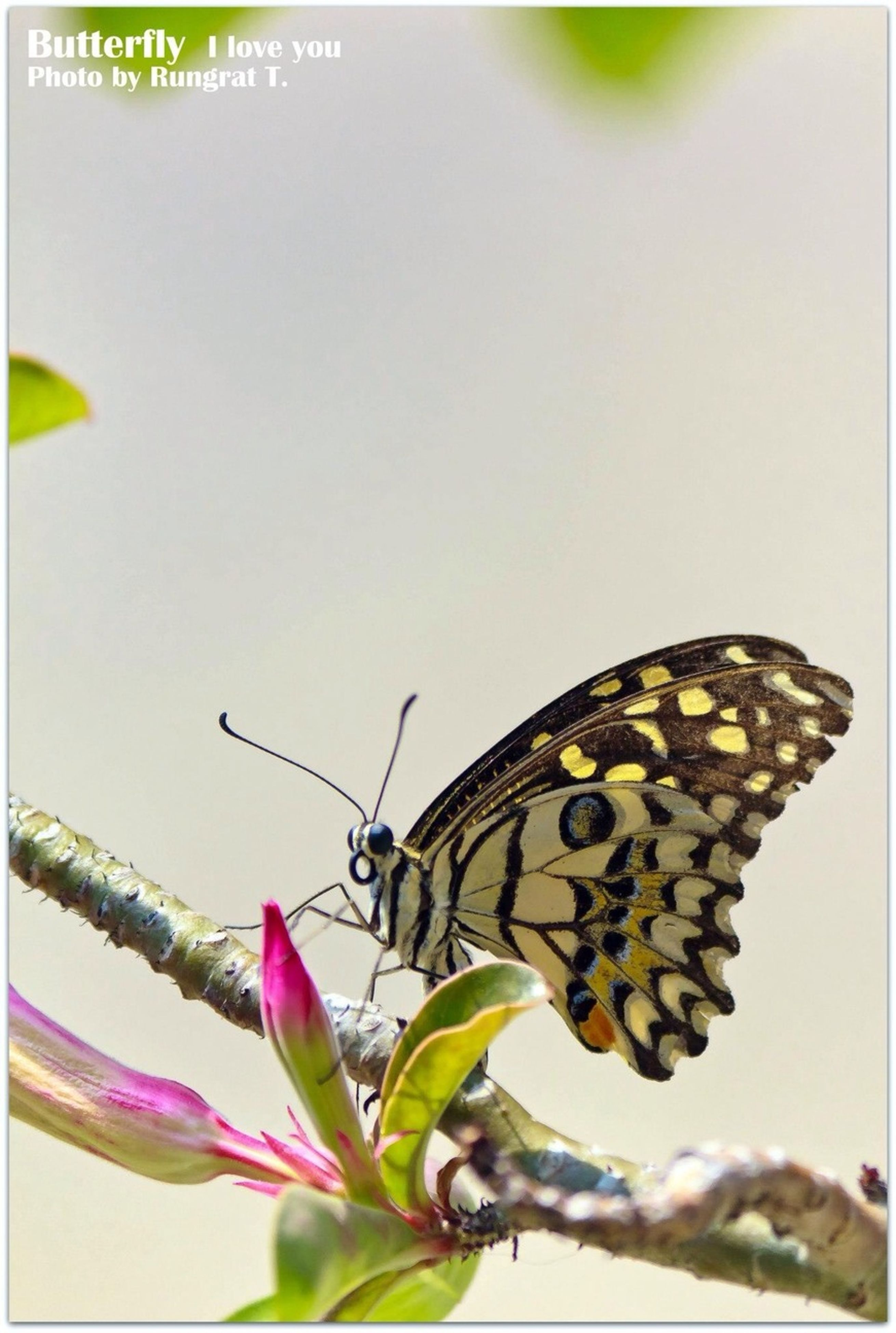 animals in the wild, insect, one animal, wildlife, animal themes, transfer print, butterfly, butterfly - insect, auto post production filter, close-up, focus on foreground, perching, animal wing, leaf, nature, outdoors, plant, day, flower, beauty in nature