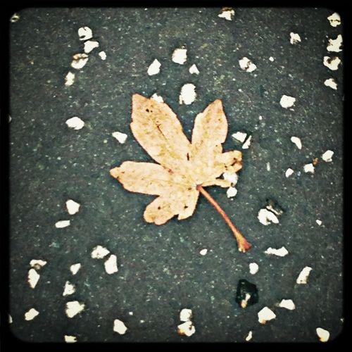 october Autumn Fall