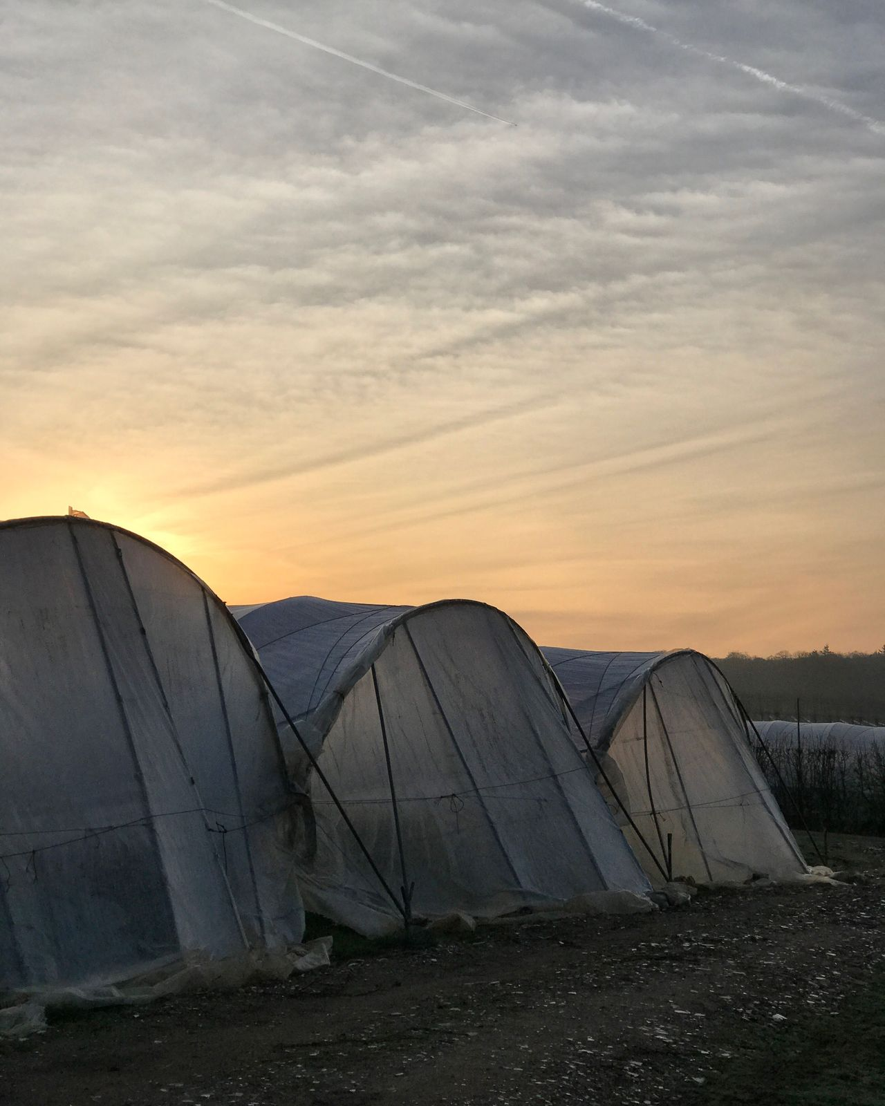 Sunrise over Tuesley Farm in Godalming, Surrey. Farming Farm Sky No People Outdoors Built Structure Sunset Nature Architecture Day Farmland Landscape_Collection Silhouette Silhouettes Polytunnel Polytunnels Beauty In Nature Sunrise Sunrise_sunsets_aroundworld Uk Surrey Hills Surrey Rural Godalming Nature