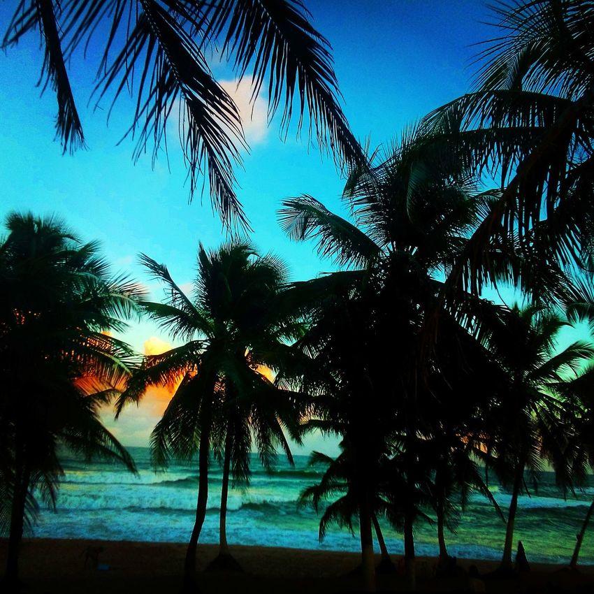 The Great Outdoors - 2015 EyeEm Awards Surf FinalDeTarde stella