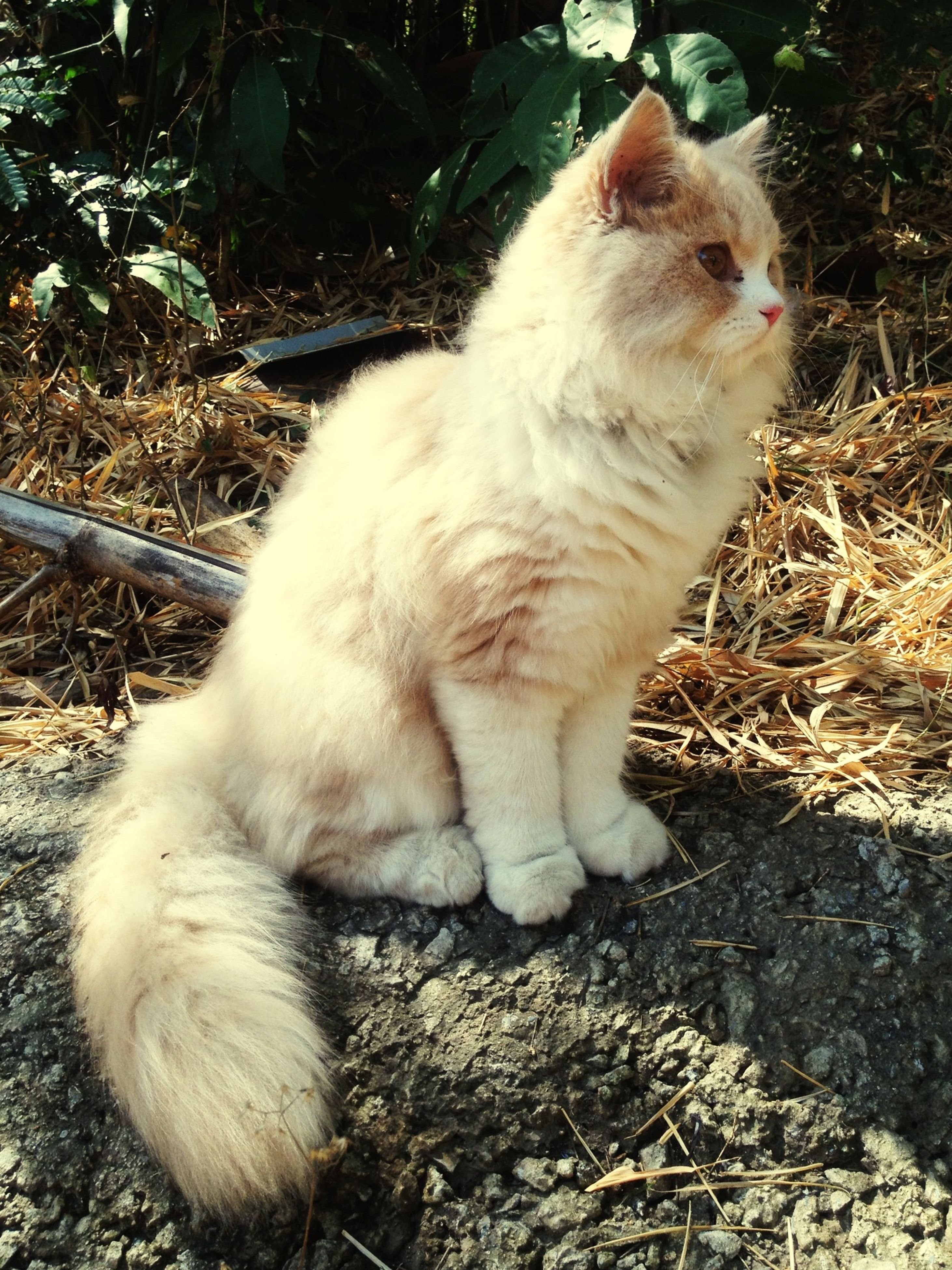 animal themes, one animal, domestic animals, mammal, pets, domestic cat, cat, feline, whisker, looking away, sitting, close-up, relaxation, outdoors, day, no people, sunlight, nature, full length, white color