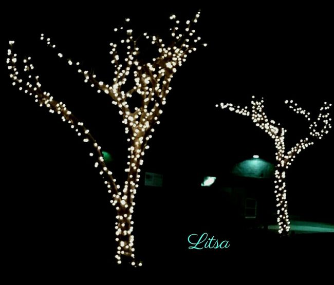 Christmas Lights Trees Seasonscollection Check This Out