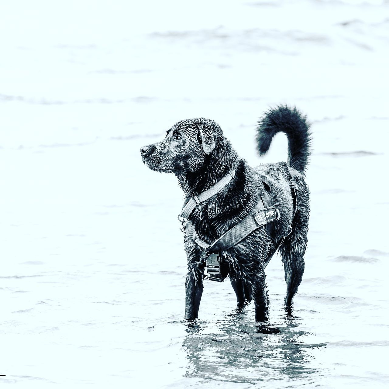 Brylee and her day at the beach Dog One Animal Pets Animal Animal Themes No People Beach Outdoors Water Nature Day Dogsofclicktozen Mammal Domestic Animals Sea
