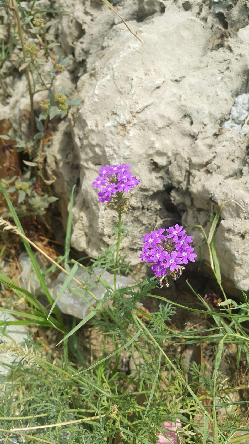 The Essence Of Summer Sun Flowers Purple Flower Outdoor First Eyeem Photo