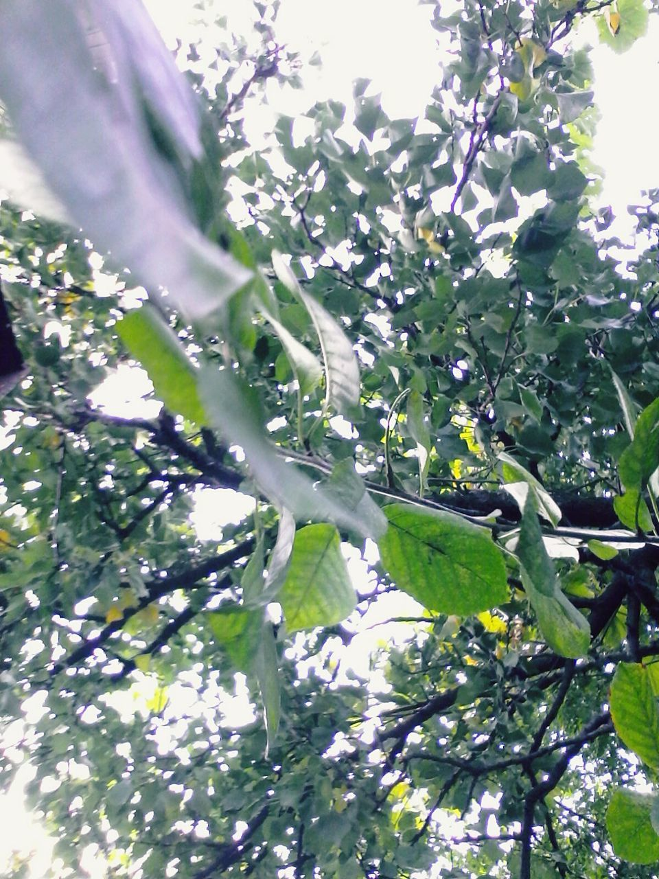 tree, growth, low angle view, branch, nature, day, beauty in nature, no people, green color, leaf, outdoors, freshness, plant, flower, hanging, fragility, close-up, sky