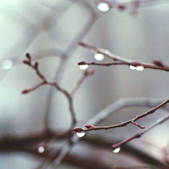 Bokeh Bokehlicious Macro Macro_collection Macroclique EyeEm Best Shots Popular Photos Drops Beautiful Branches