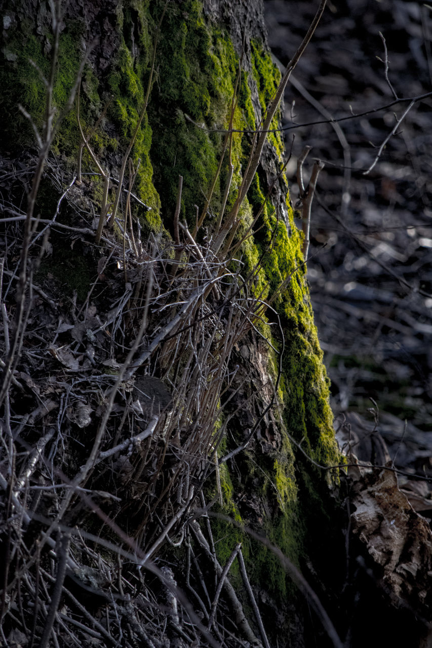 nature, no people, outdoors, growth, forest, root, day, branch, close-up, tree, beauty in nature