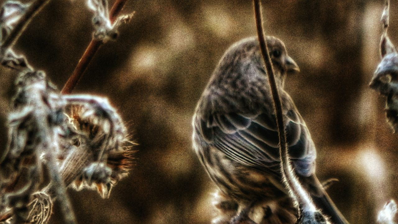 animal themes, bird, animals in the wild, no people, focus on foreground, animal wildlife, day, close-up, nature, outdoors