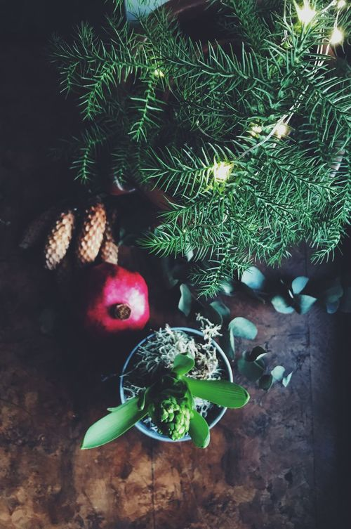 Christmas decorated table Green Color No People High Angle View Christmas Tree Christmas Plant Close-up Indoors  Growth Tree Christmas Decoration Christmastime Christmas Directly Above Top Perspective Top View Cone Cones Indoors  First Sunday Of Advent Advent Season Christmas Lights Day Freshness