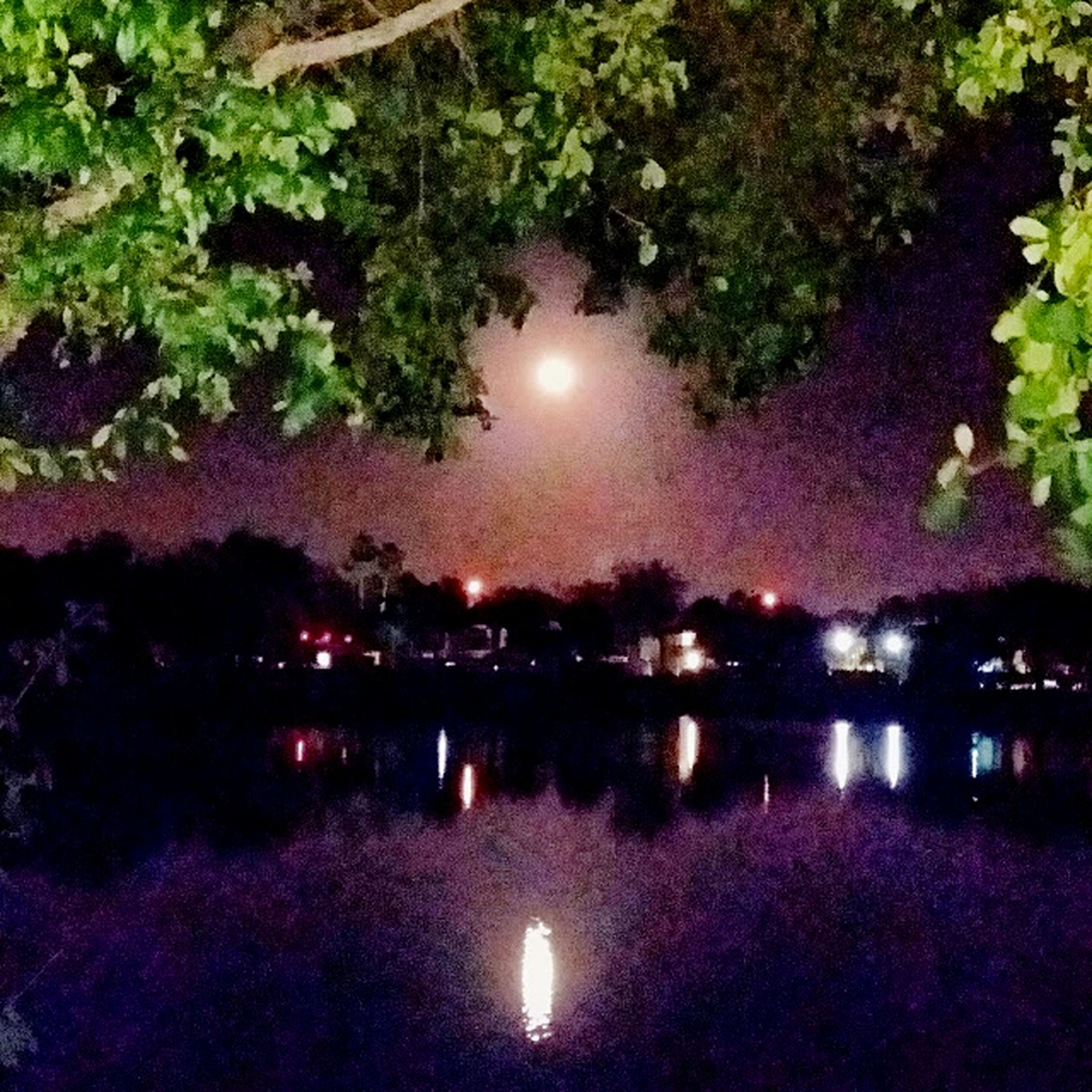 illuminated, tree, night, water, reflection, tranquility, scenics, tranquil scene, beauty in nature, growth, nature, lake, sky, idyllic, outdoors, glowing, pink color, no people, multi colored, park - man made space