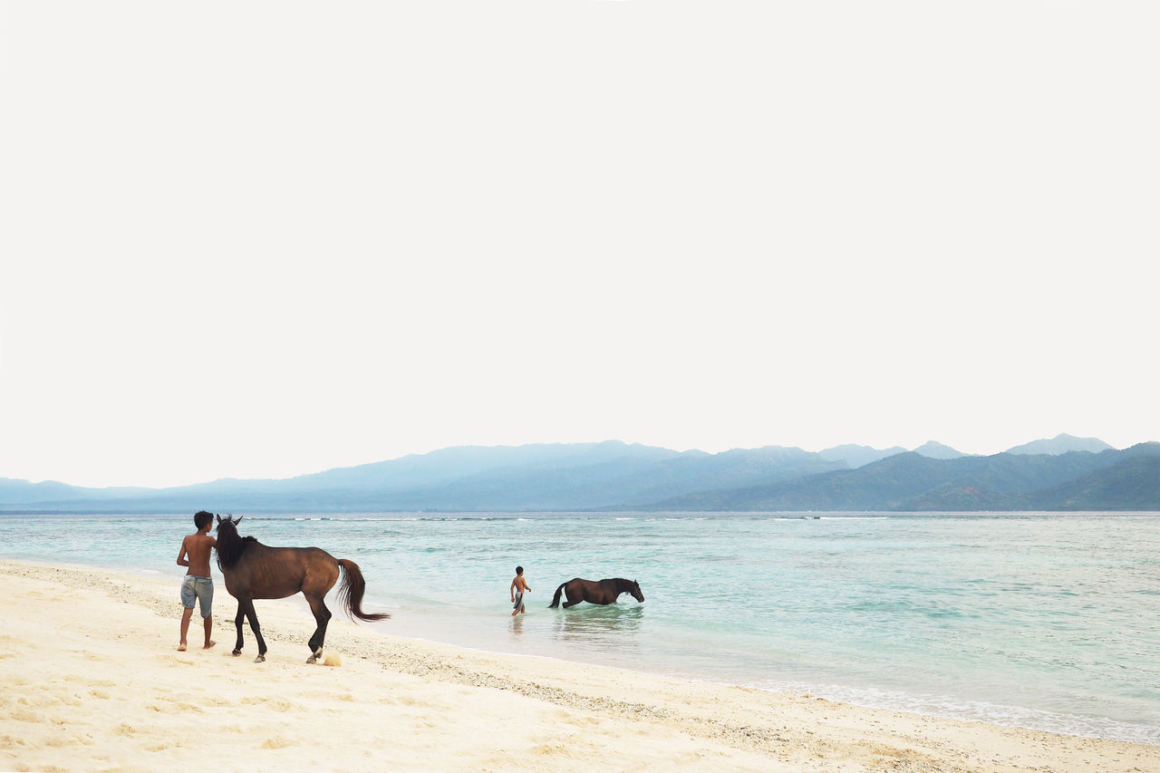 Bathe Beach Horse Horses Landscape Old Olympus Sand Sea Sky Travel