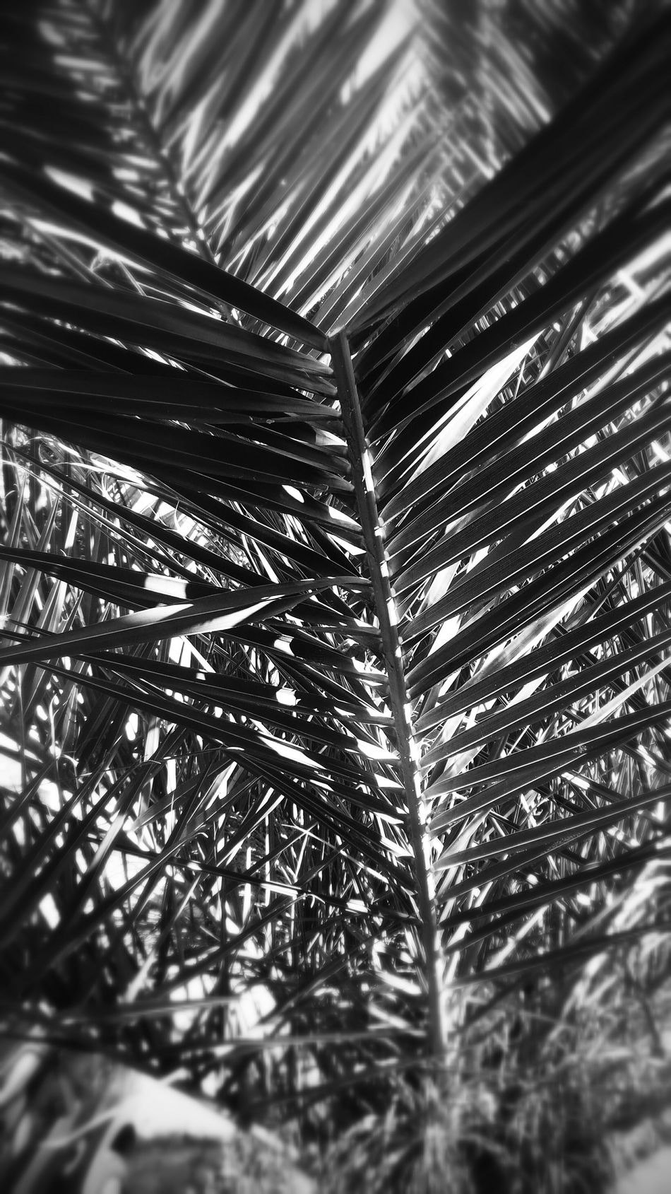 Black And White Nature Taking Photos