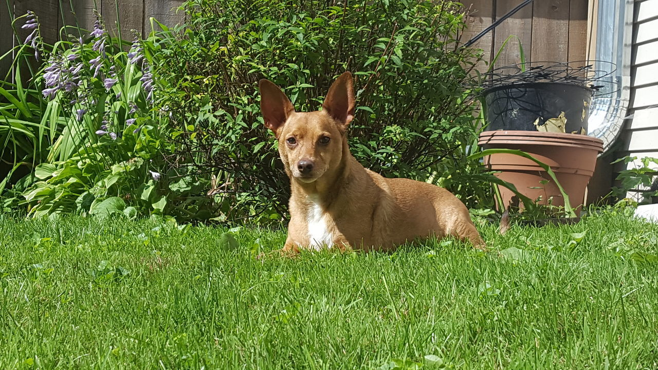 Animal Themes Dog Dog In Backyard Dog Portrait Dog Sitting On The Grass Domestic Animals No Filter No Edit One Animal Pets