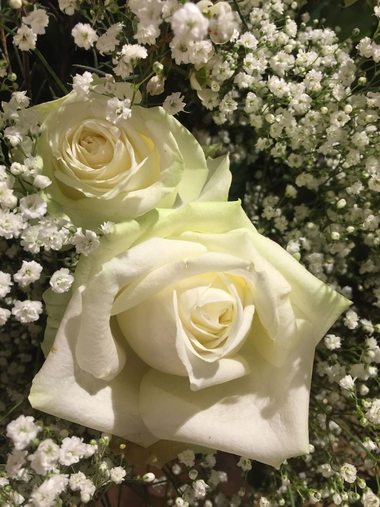 White roses flower decoration Flower Rose - Flower Fragility Bouquet Nature White Color Beauty In Nature Petal Love Flower Arrangement Freshness Flower Head No People Close-up Summer Indoors  Day Gift Valentine's Day  Mothers Day
