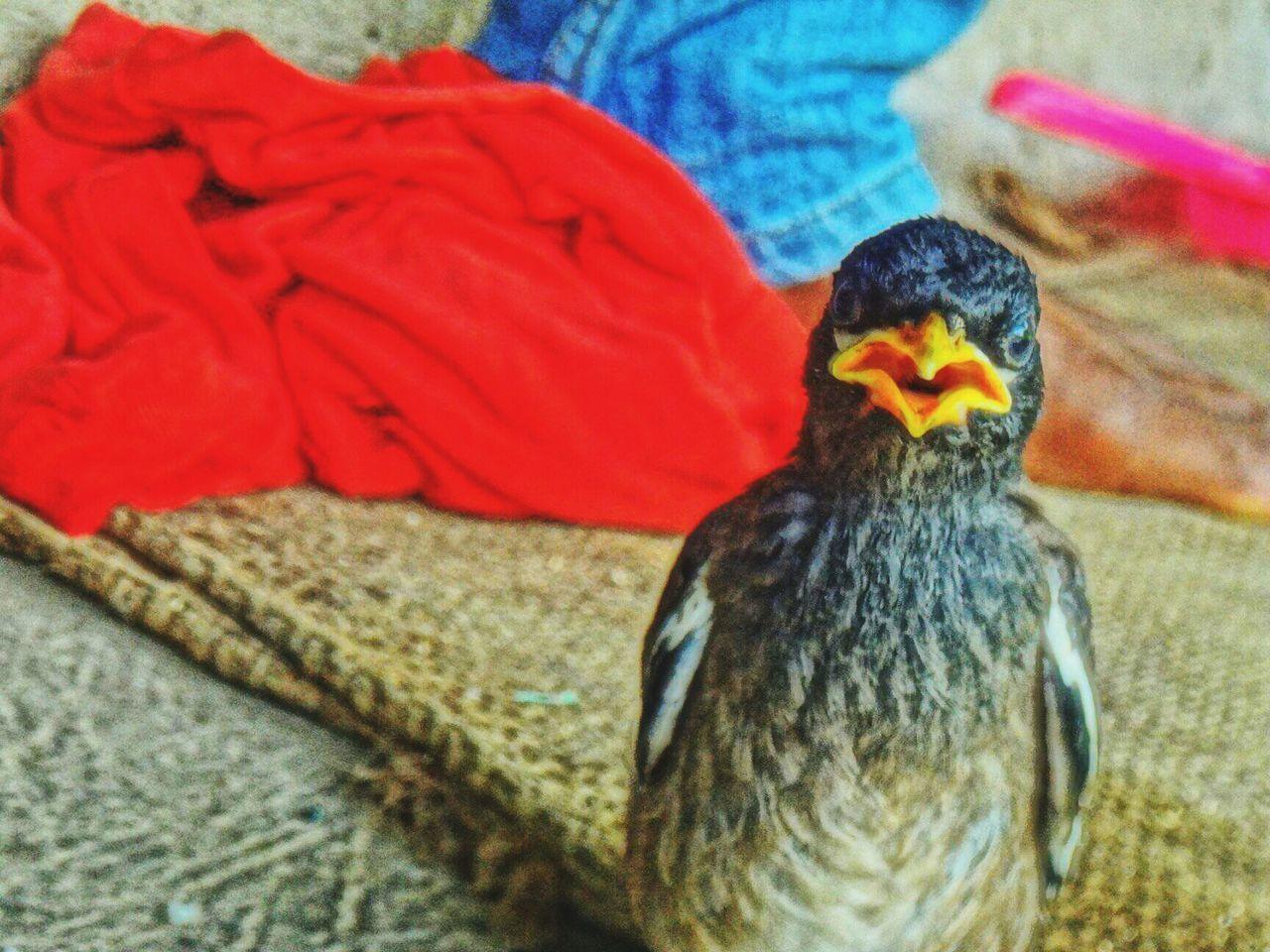bird, animal themes, animals in the wild, one animal, animal wildlife, no people, close-up, beak, day, indoors, nature