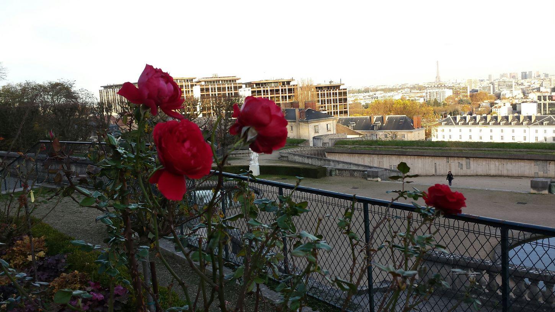 Rose D'automne Roses Tour Eiffel Paris, France