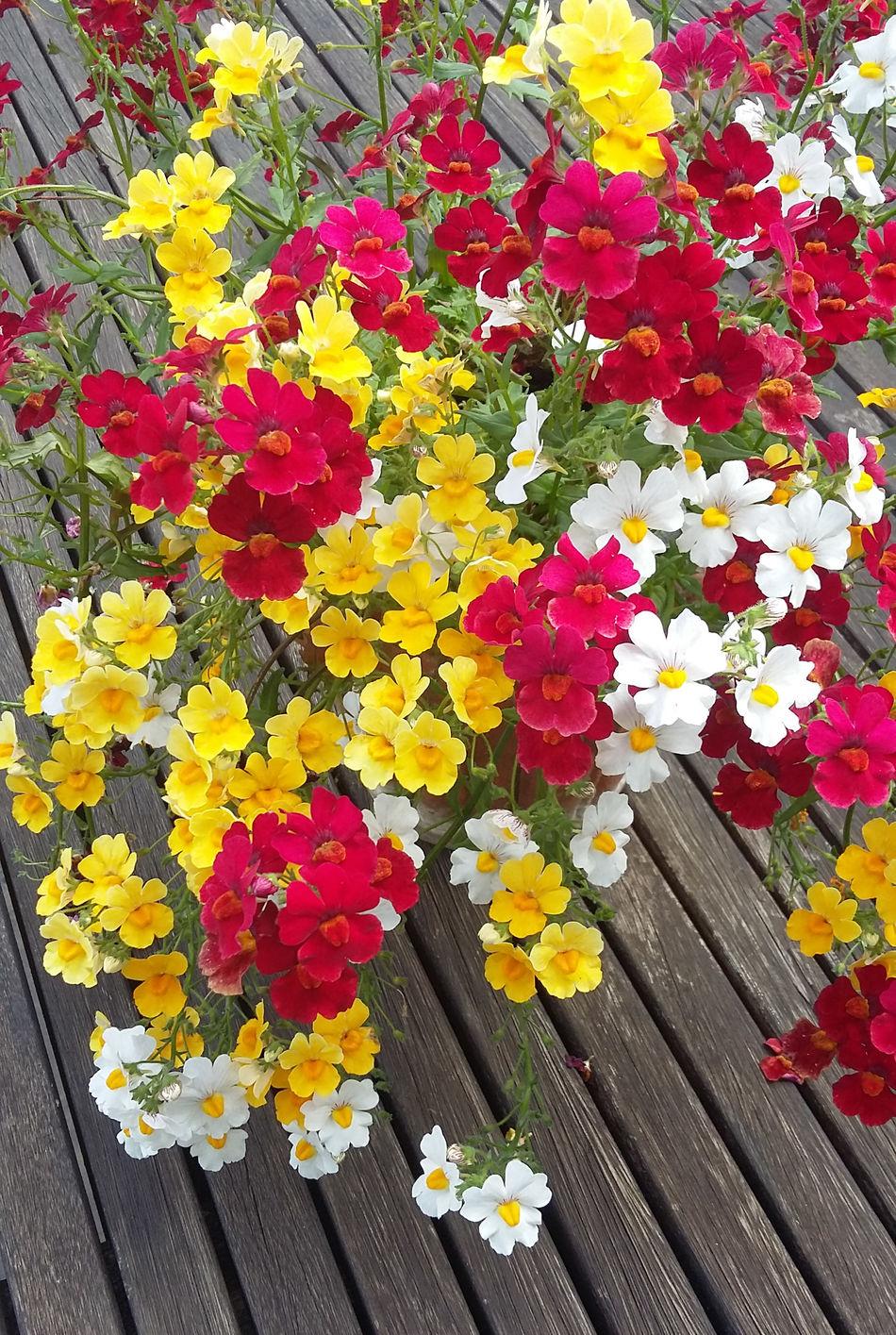 Flowers Summer Nofilter Colorful Topfpflanze Echte Farben Naturelovers Blumenpracht🌺🍃 Naturpur Unsere Terrasse Balkonien Zuhause 💕