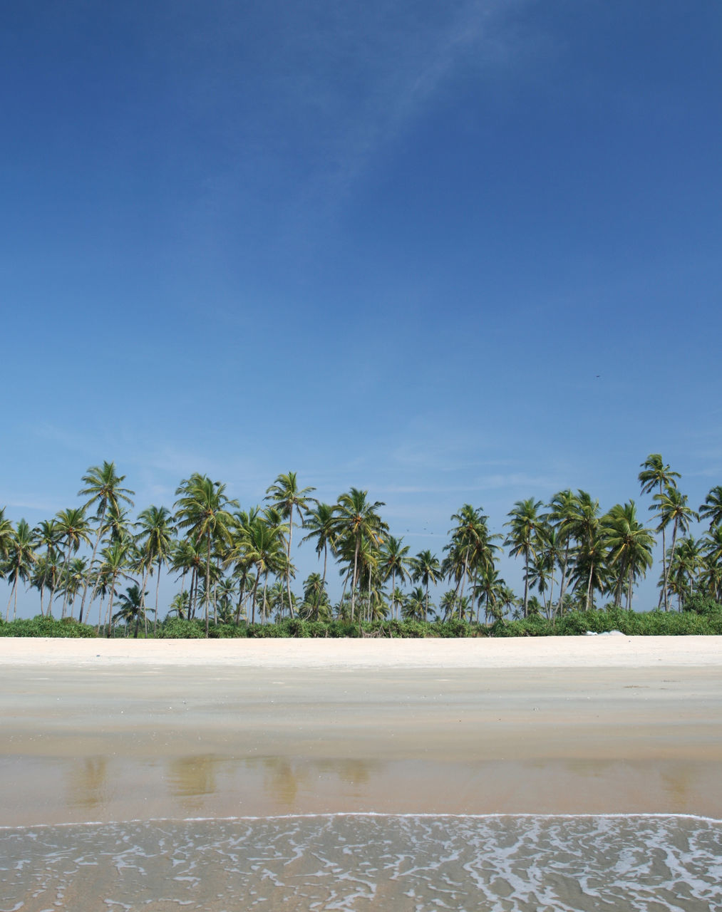 Palm Trees On Beach Against Blue Sky