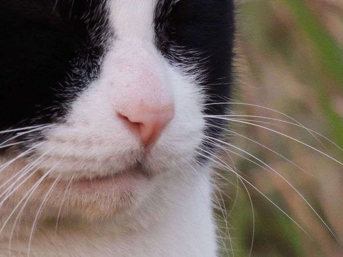 Animal Body Part Animal Nose Animal Themes Close-up Day Domestic Animals Domestic Cat Feline Mammal No People One Animal Outdoors Pets Stary Cat The Purist (no Edit, No Filter)