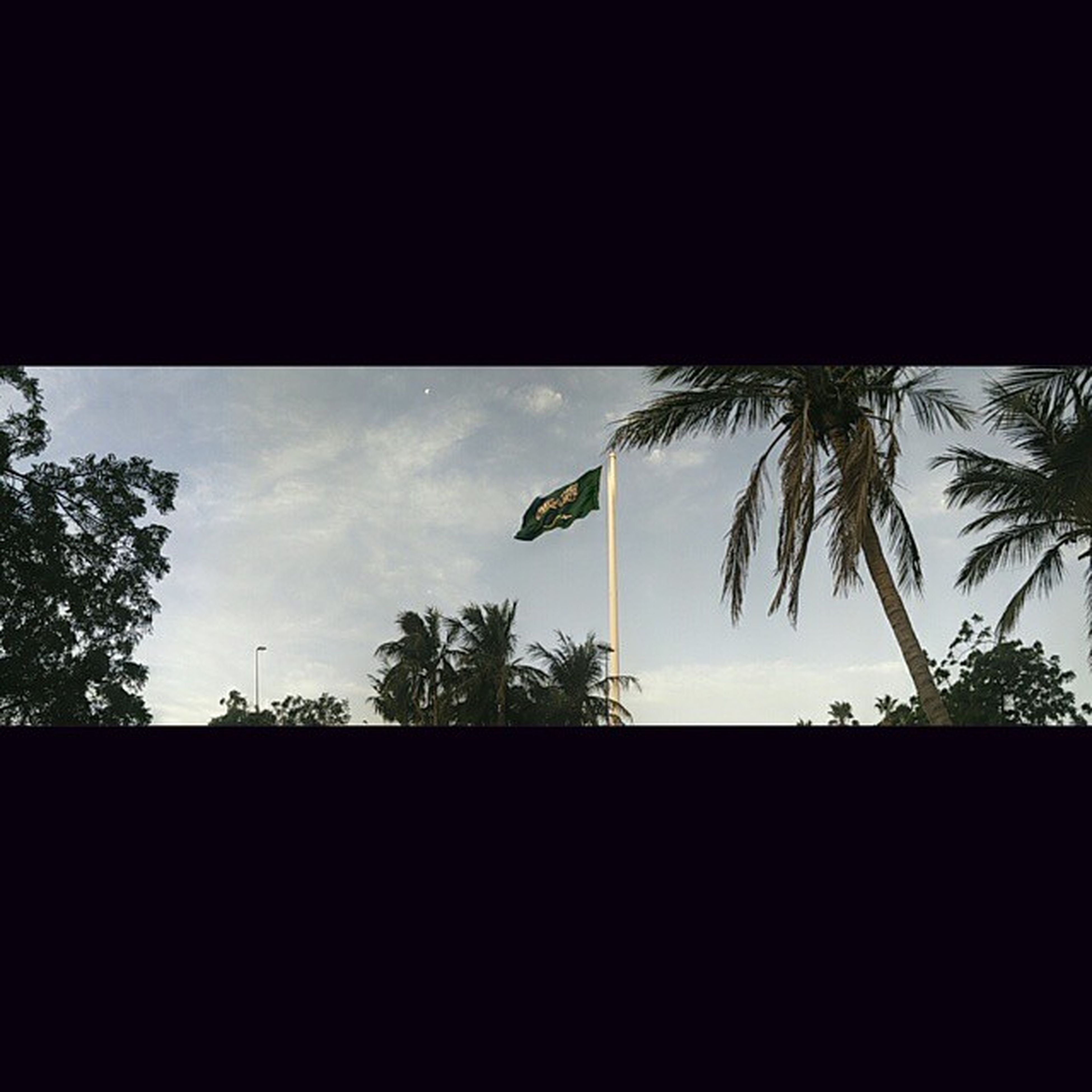 silhouette, tree, low angle view, sky, palm tree, tranquility, nature, outline, beauty in nature, copy space, scenics, tranquil scene, growth, cloud - sky, cloud, dark, outdoors, no people, sunset, dusk