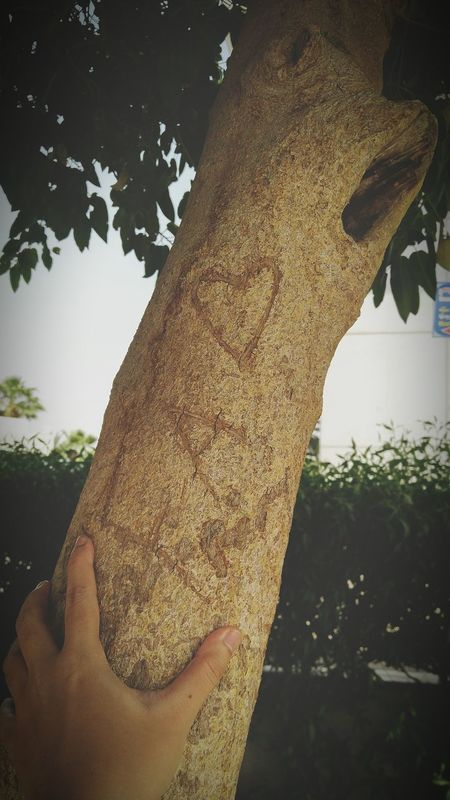 Human Body Part Human Hand One Person Tree Outdoors People Day Adults Only Adult One Woman Only Only Women Tree Trunk Nature Sky Close-up Looking At Camera رمضان_كريم❤❤ مكة_الحرم مكة_المكرمه الطايف_كروشيه جدة جدة_لايف Black Background Unhealthy Eating Plate