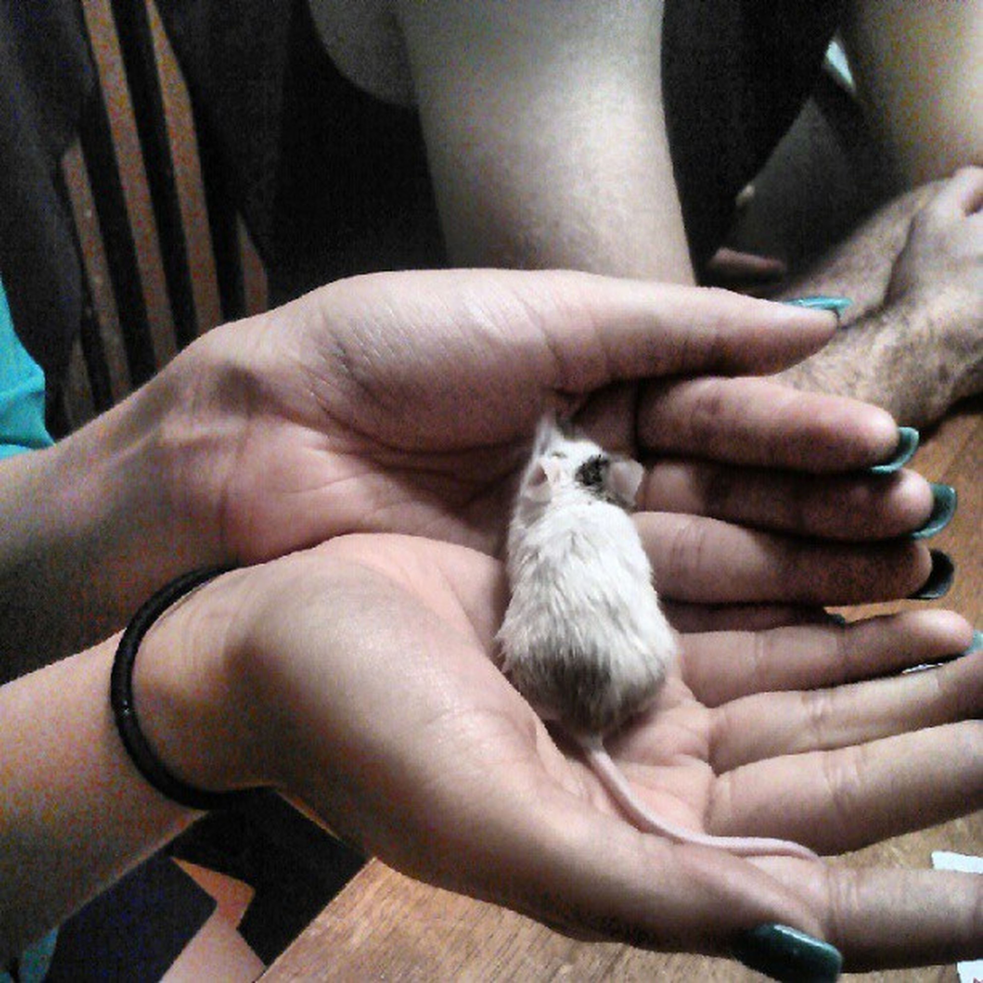person, animal themes, part of, cropped, holding, one animal, human finger, togetherness, indoors, animals in the wild, men, wildlife, lifestyles, unrecognizable person, young animal, care