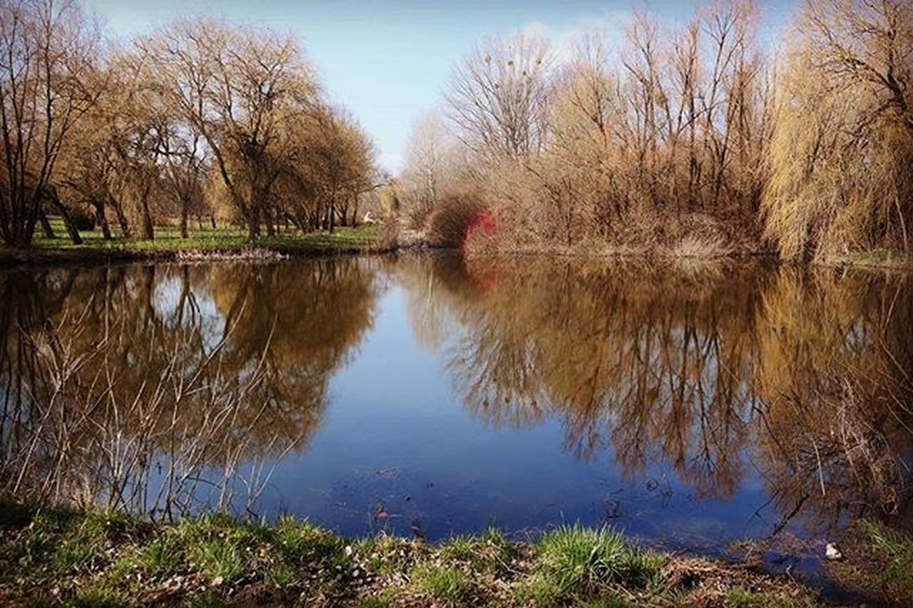 Naturalmirror Arboretum Calmness Trees Lake