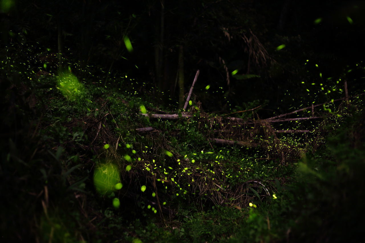 firefly Beauty In Nature Bright Spots Close-up Dead Wood Fireflies Fireflies In The Night  Firefly Firefly2017 Forest Grass Green Color Growth Insect Photography Insects  Nature Night No People Outdoors Tranquility Wilderness Wilderness Area