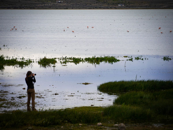 Calafate Dawn Lago Argentino Nature Peace Pond Reflecting Water Shiny Water Silhouette Taking Photos Of People Taking Photos Water