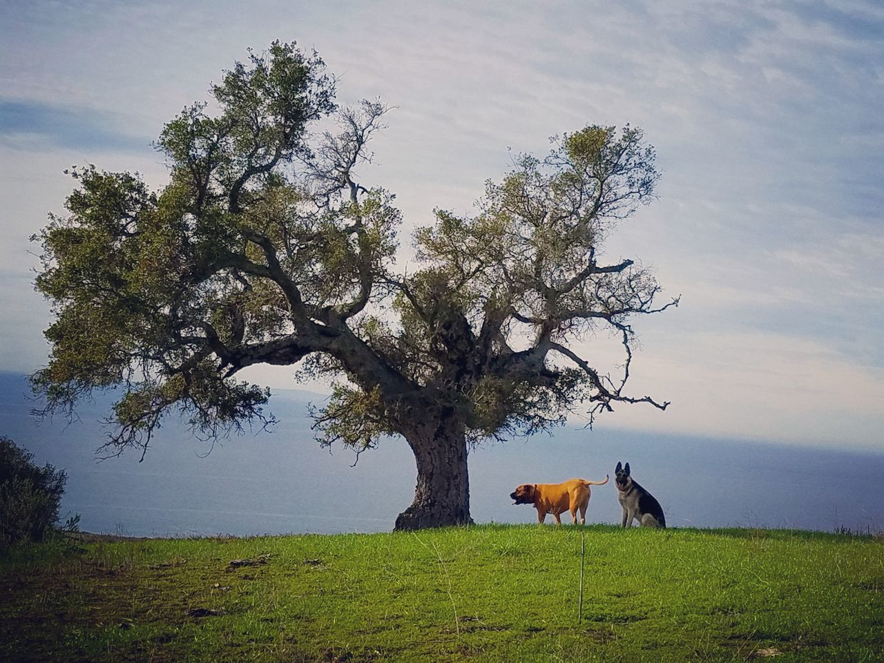 Tree Nature Beauty In Nature No People Landscape Outdoors Ocean View Sky Gaviotacoast Pacific Ocean Finding New Frontiers Dogs Dogs Dogs
