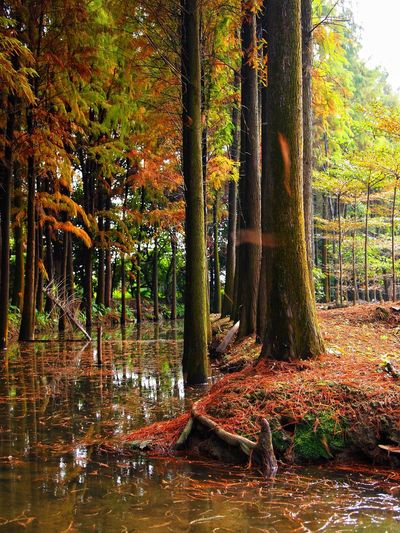Tree Autumn Nature Tree Trunk Forest Leaf Scenics Beauty In Nature Tranquility Change Tranquil Scene Outdoors No People Water WoodLand Day Landscape Travel Destinations Growth Branch