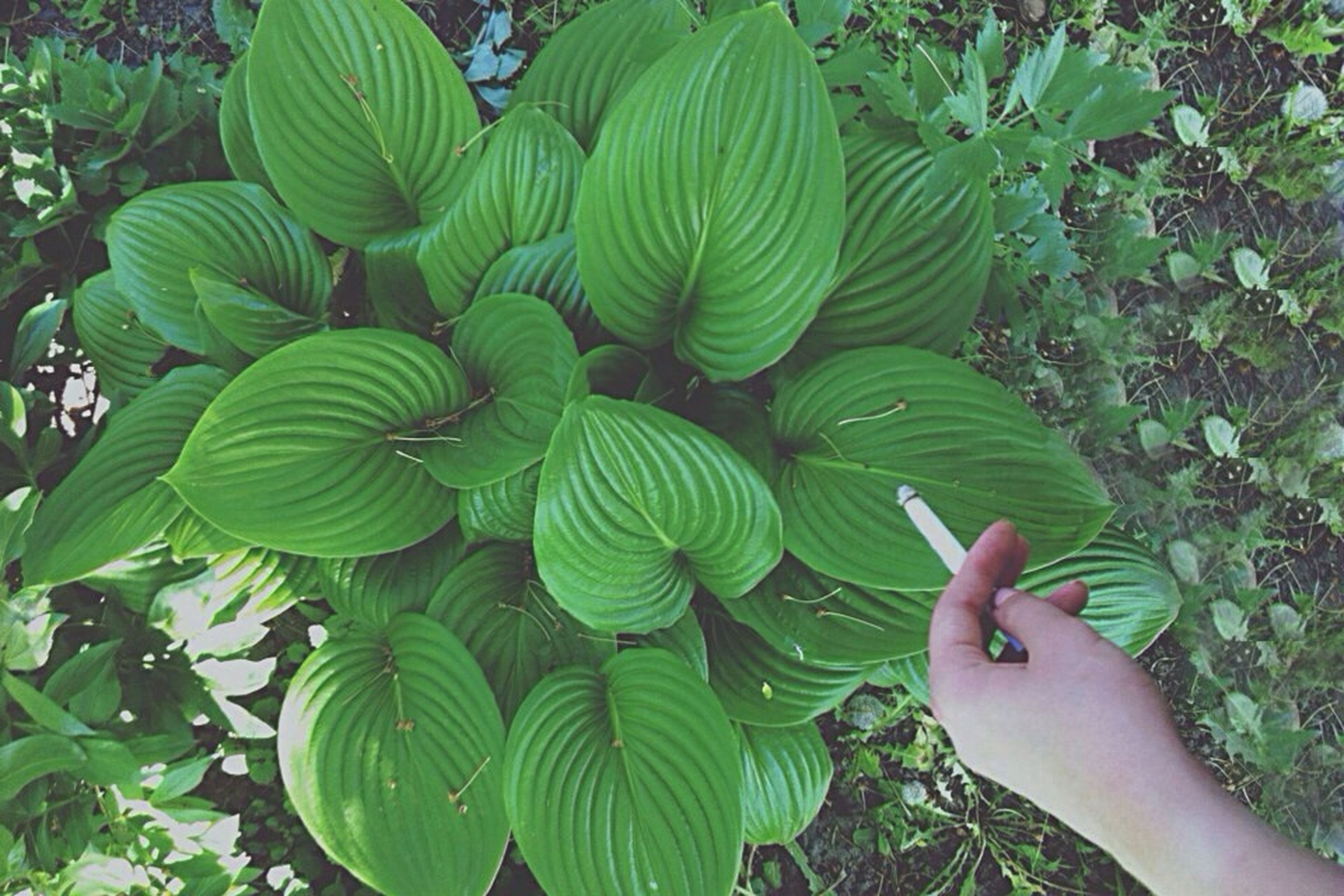 green color, leaf, growth, plant, person, nature, part of, beauty in nature, high angle view, unrecognizable person, day, outdoors, freshness, close-up, cropped, leisure activity, lifestyles