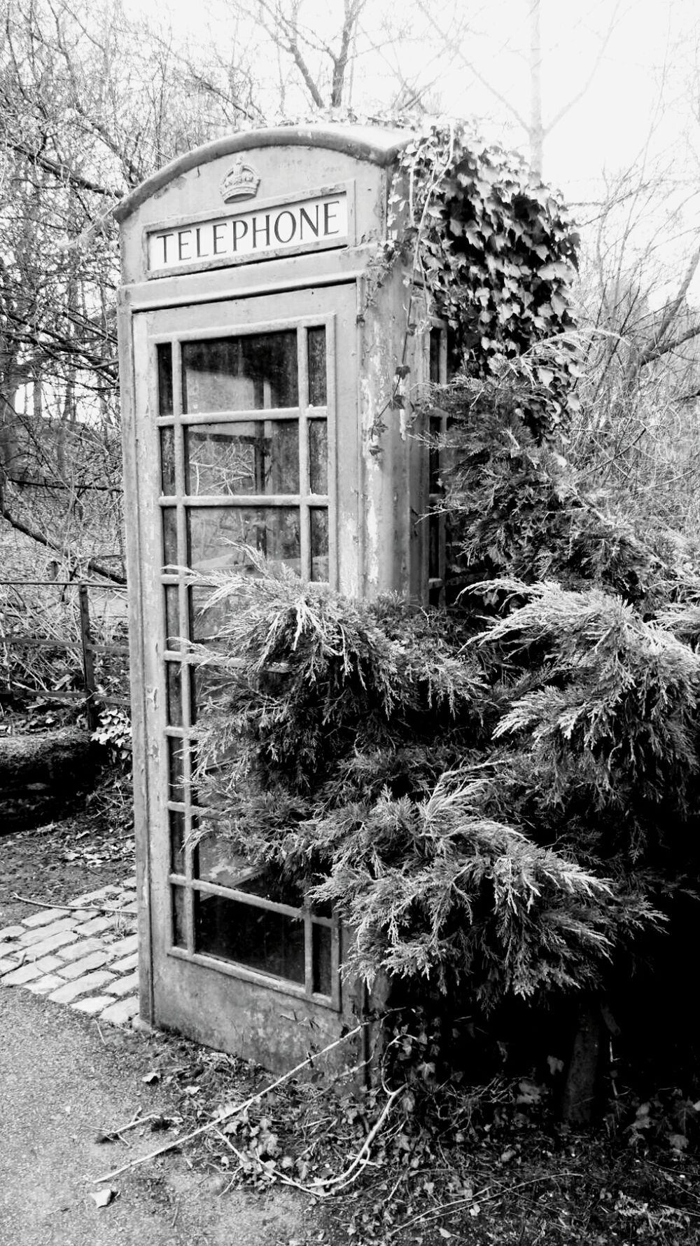 Outdoors Growth Day Plant Communication Text Grass Telephone Booth No People Nature Countryside Nature British Scenes Retro Telephone Countryside Red Telephone Box Growth Wildlife And Nature Telephone Box