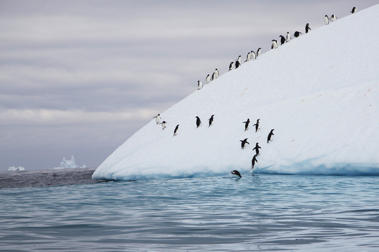 Beautiful stock photos of pinguin,  Adversity,  Animal Themes,  Antarctica,  Beauty In Nature