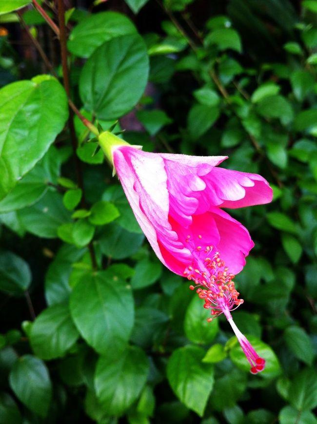 Morning Blooming Flowers Beautiful Surroundings