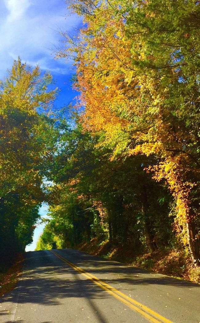 Road Fall Leaves Road Roadway Rural Scene Autumn Road Fall Roads Tree Autumn Nature The Way Forward Beauty In Nature Sunlight Change Scenics Transportation Tranquility Growth Outdoors Tranquil Scene No People Day Car Sky
