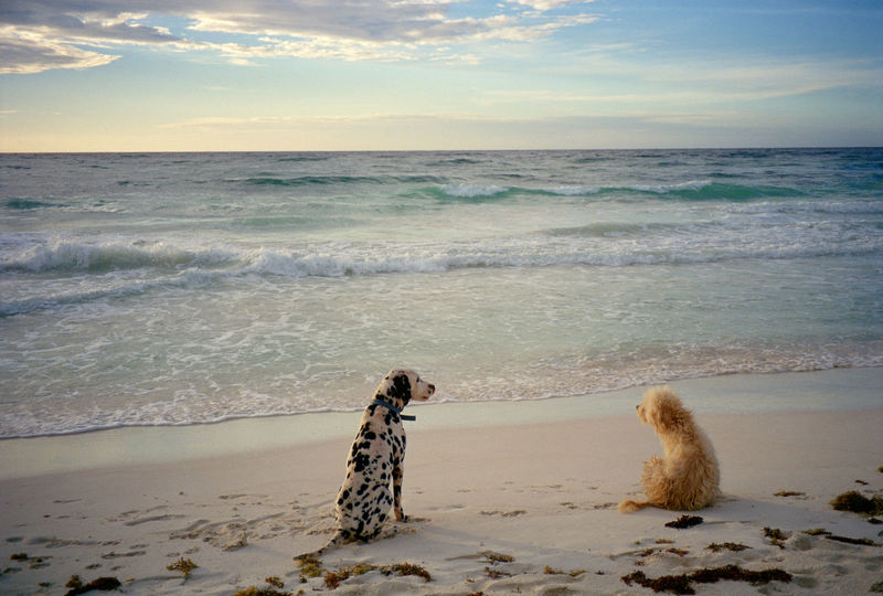 Africa Dalmatian Dalmatian Dog Dog Love Dogs Dogs On Beach Mexico Nature_collection Two Is Better Than One What Who Where Chance Encounters Art Is Everywhere Live For The Story Lost In The Landscape