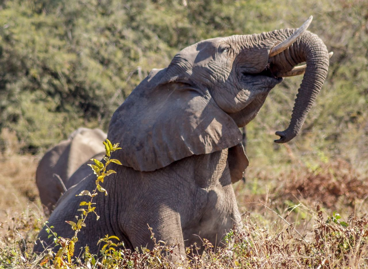 Elephant at LakeKariba Zimbabwe Animal Photography Africa Safari Nature_collection Wildlife Photography Wildlife Nature Animals In The Wild Nature Photography