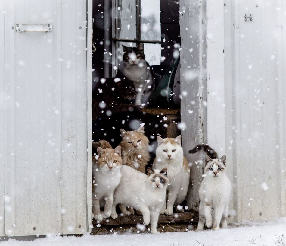 Beautiful stock photos of katzen, Animal Themes, Cold Temperature, Day, Domestic Animals