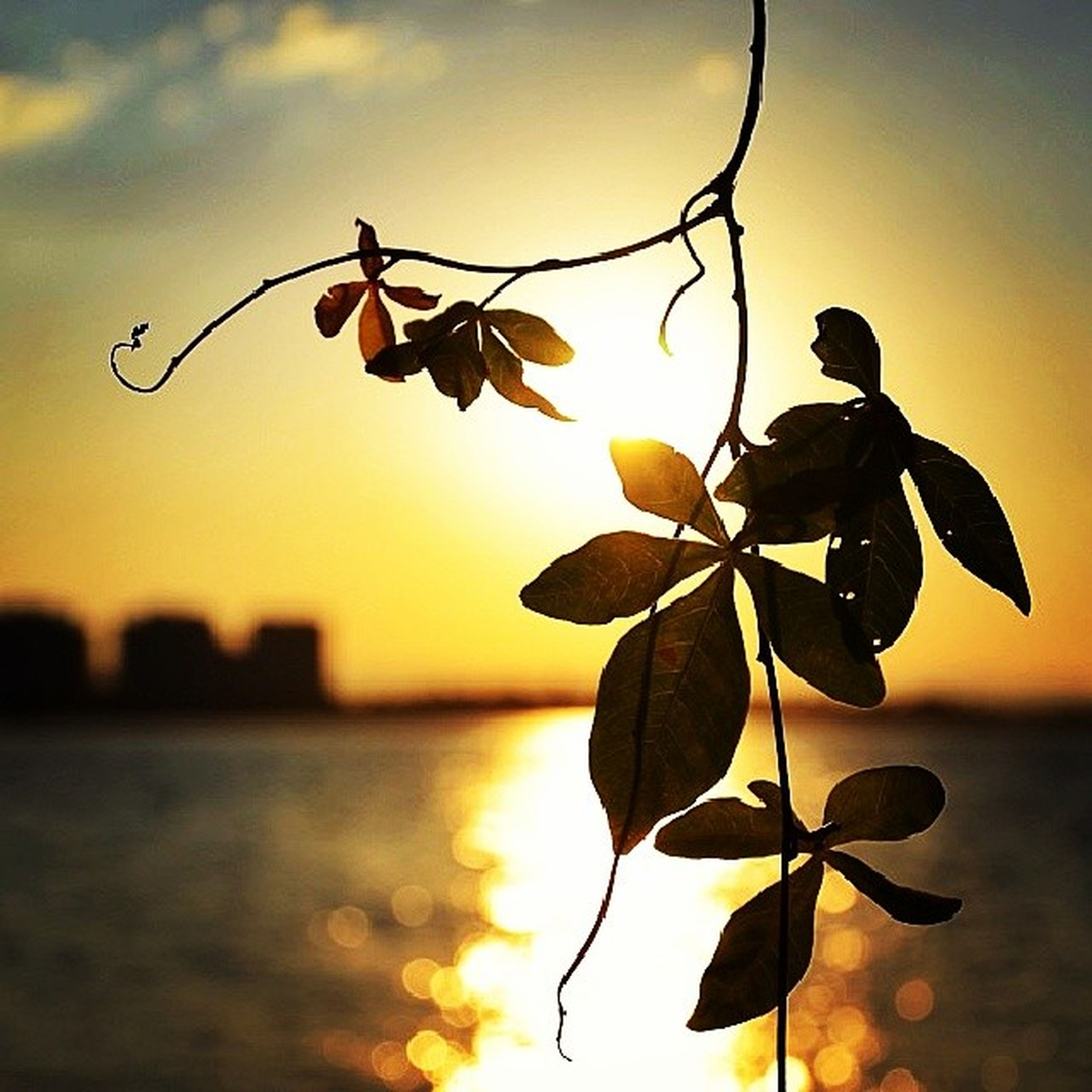 sunset, focus on foreground, close-up, leaf, stem, orange color, nature, plant, sky, growth, beauty in nature, fragility, branch, twig, flower, silhouette, freshness, water, bud, outdoors