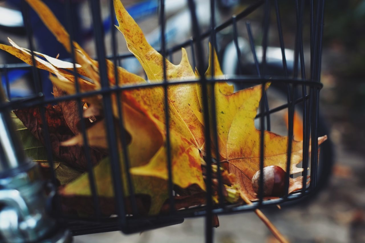 Close-Up Of Autumn Leaves In Bicycle Basket